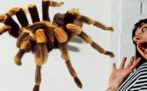 Боязнь пауков и как от неё избавиться