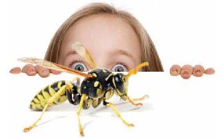 Боязнь различных насекомых