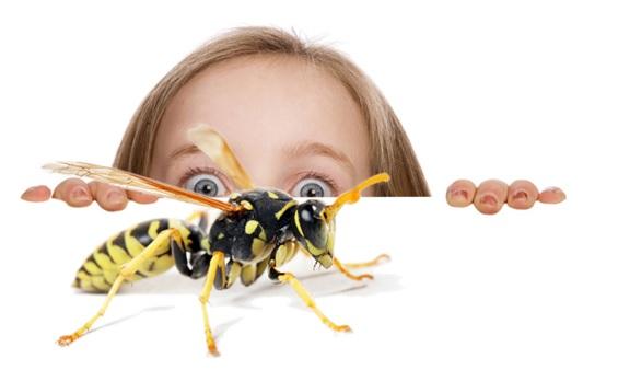 Боязнь насекомых 2