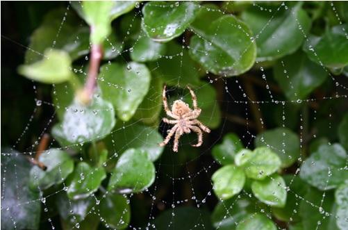 Боязнь пауков 4