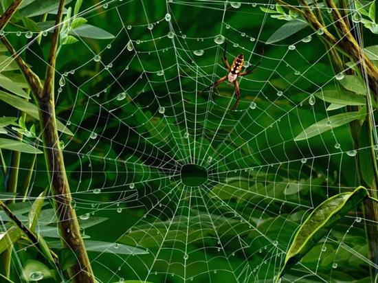 Боязнь пауков 5