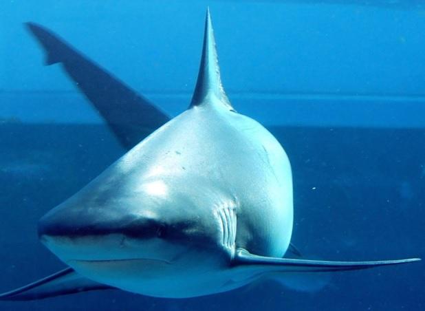 Боязнь акул 2