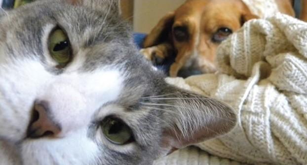 Боязнь кошек 4